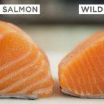 Alimentation et Santé : Le saumon pas si bio que ça !