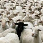 Opération Crescendo  : Quand la guerre civile menace et que les moutons se réveillent !