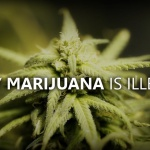 Science et vie : Pourquoi le cannabis est-il illégal ?