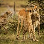 Une histoire de Gazelle : Ou comment un fake peut porter préjudice à une photographe de renom !