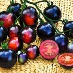 Alimentation : Cultures hybrides VS  cultures paysannes, dans quel monde vivons-nous et surtout où allons nous ?