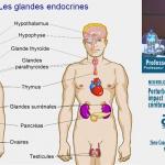 Santé publique : Les perturbateurs endocriniens, qu'est-ce que c'est ?