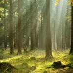Science & Vie : Les arbres ont une vie secrète que nous n'imaginons pas