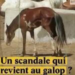 Maltraitance animale : Un scandale qui revient au galop ?